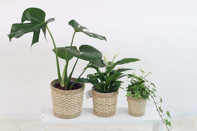 rostliny v květináči